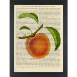 Apricot vintage botanical drawing Dictionary Art Print