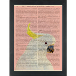 Cockatoo Pink Outback Australia Dictionary Art Print