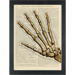 Hand Skeleton Bones Anatomy Drawing Dictionary Art Print