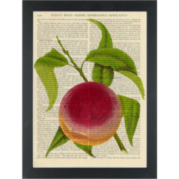 Peach vintage botanical drawing Dictionary Art Print