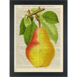 Pear vintage botanical drawing Dictionary Art Print