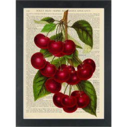 Red Cherry vintage botanical drawing Dictionary Art Print