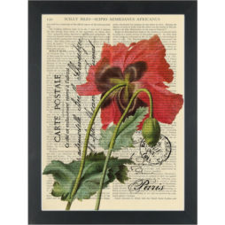 Red poppy flower vintage botanical drawing on french post card Dictionary Art Print