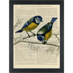 Robins on a branch vintage botanical drawing Dictionary Art Print
