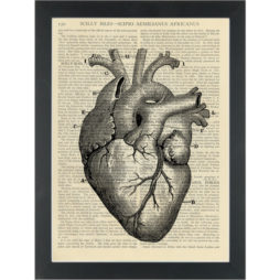 Vintage anatomy drawing Heart Dictionary Art Print