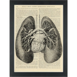 Vintage anatomy drawing Lungs Dictionary Art Print