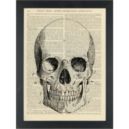 Vintage anatomy drawing Skull Dictionary Art Print
