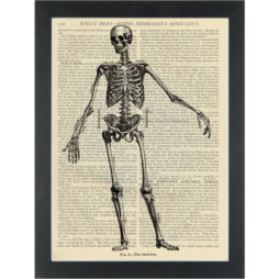Medical Skeleton vintage drawing black and white Dictionary Art Print