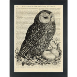 Owl black and white vintage drawing Dictionary Art Print