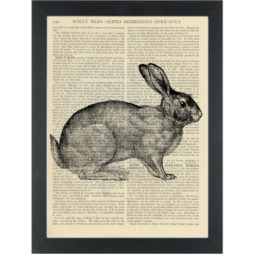 Rabbit black and white vintage botanical drawing Dictionary Art Print