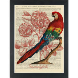 Red Macau Bird botanical drawing Dictionary Art Print