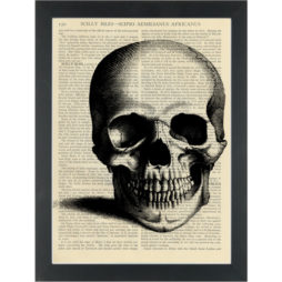 Skull black and white vintage medical drawing Dictionary Art Print