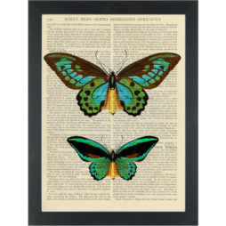 Butterflys green botantical drawings Dictionary Art Print