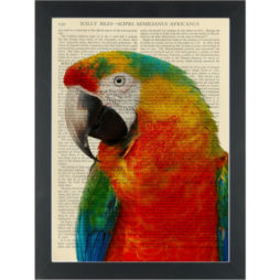 Rainbow Parrot Dictionary Art Print