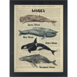 Whale lovers delight Dictionary Art Print