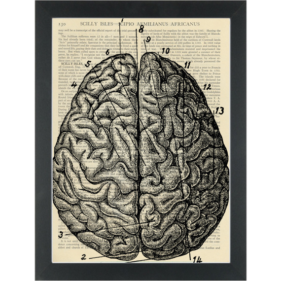 Vintage Anatomical Drawing Brain Dictionary Art Print Page Turner
